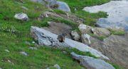 Marmotta - Marmotta